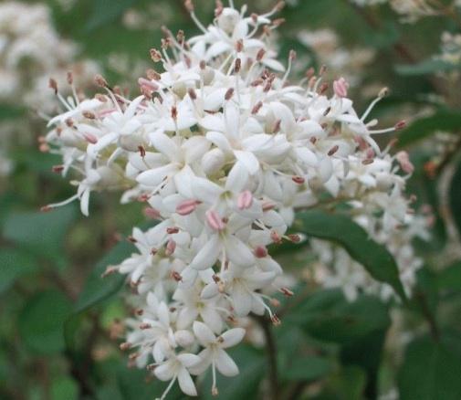 Henna Flower Copy Earthhenna