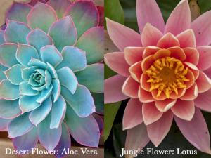 Henna flower and jagua flower